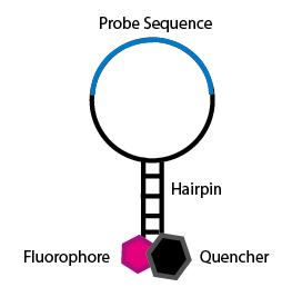 SNP-Molecularprobe-1